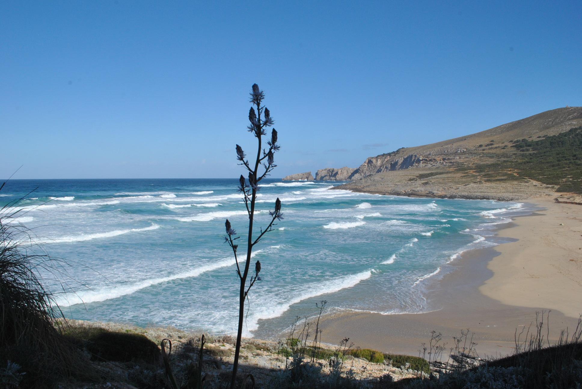 plaże na majorce